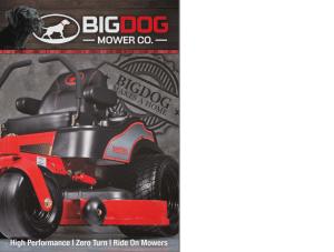 bigdog cat